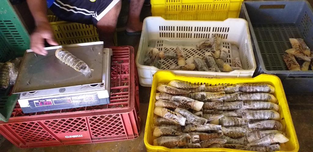 Cola de langostas congelados mariscos pescados