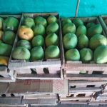 Mango yulimas