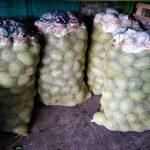 Mango filipino