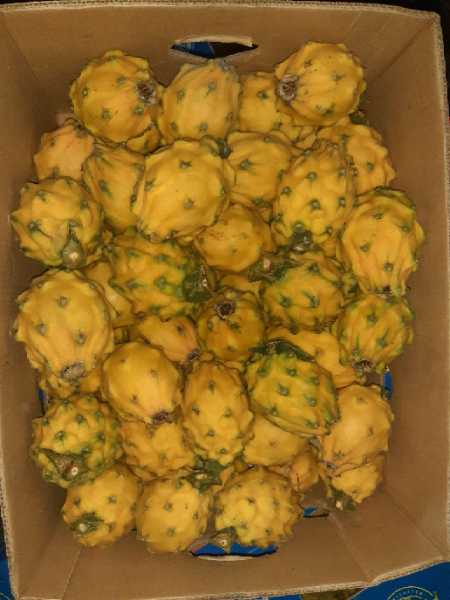 pitaya amarilla
