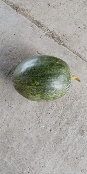 Ahuyama (Zapallo) – Bolo Verde