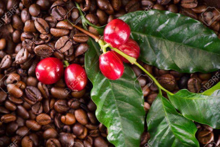 CAFE Y SABOR LOS ROBLES